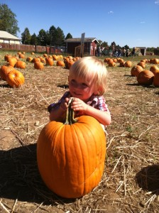 Picking the right pumpkin at Cottonwood Farms.