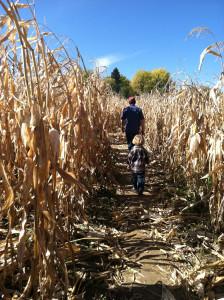 Exploring a corn maze.